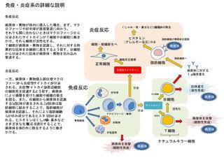 免疫・炎症反応.jpg